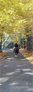 Rider on a lane surrounded by beautiful Fall colors.