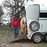 Teaching a horse to self-load into a two horse trailer.