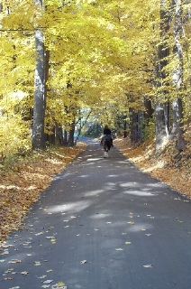 Horse and rider going down the trail surrounded by beautiful Fall colors.